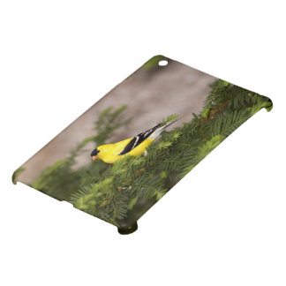 American Goldfinch male in a tree Case For The iPad Mini