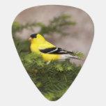 American Goldfinch male in a tree Guitar Pick
