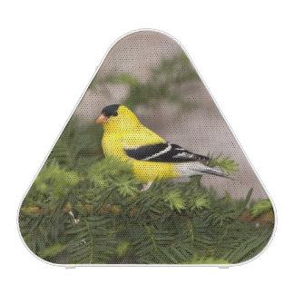 American Goldfinch male in a tree Speaker