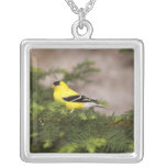 American Goldfinch male in a tree Square Pendant Necklace