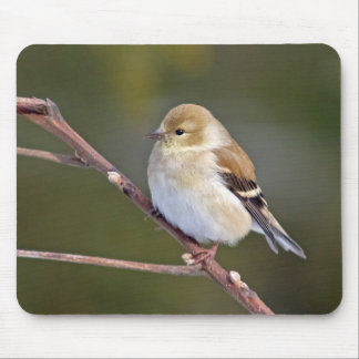 American Goldfinch Mouse Pad