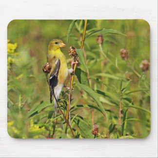 American Goldfinch Mousepad