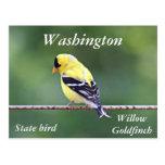 American goldfinch photo postcard