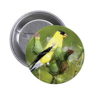 American Goldfinch Photograph Button