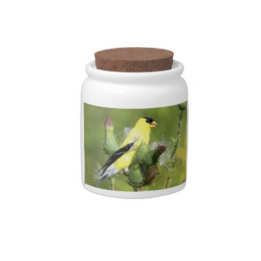 American Goldfinch Photograph Candy Jar