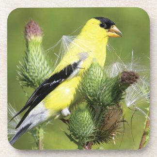 American Goldfinch Photograph Cork Coasters