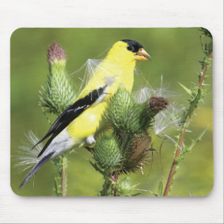 American Goldfinch Photograph Mousepad