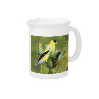 American Goldfinch Photograph Pitcher