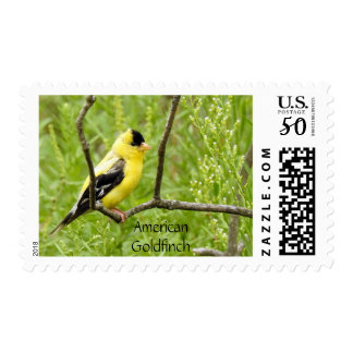 American Goldfinch Postage