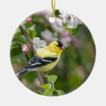 American Goldfinch with spring apple blossoms Christmas Tree Ornaments