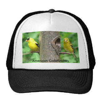 American Goldfinches Hat