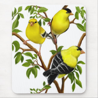 American Goldfinches in Vines Mousepad