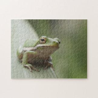 American Green Tree Frog (Hyla cinerea) Jigsaw Puzzle