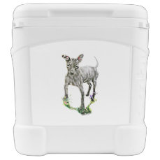 American Hairless Terrier Cooler