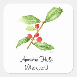 American Holly (Ilex opaca) Botanical Seal