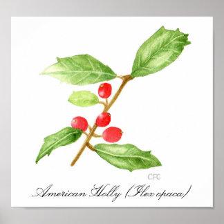 American Holly (Ilex opaca) Poster
