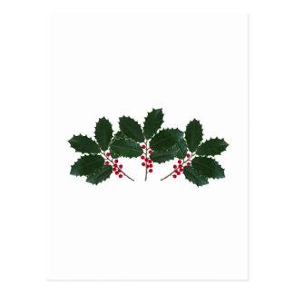 American Holly Leaves - Berries Postcard