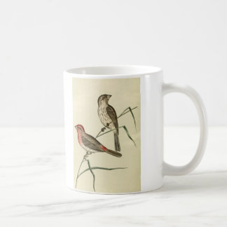 American House Finch Coffee Mug
