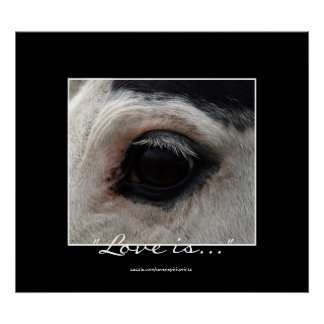 American Indian Painted Pony Horse Eye Photo Print