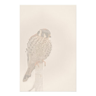 American Kestral Raptor Bird Stationery