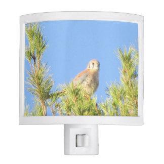 American Kestrel Night Light