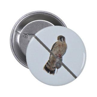 American Kestrel (Falco sparverius) Items 2 Inch Round Button