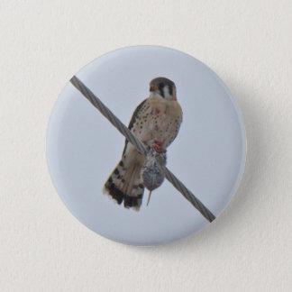 American Kestrel (Falco sparverius) Items Button