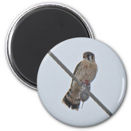 American Kestrel (Falco sparverius) Items Magnet