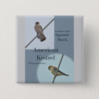 American Kestrel (Falco sparverius) Items Pinback Button