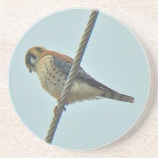 American Kestrel (Falco sparverius) Items Sandstone Coaster