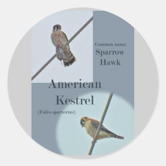 American Kestrel Falco sparverius Items Round Stickers
