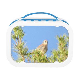 American Kestrel Lunch Box