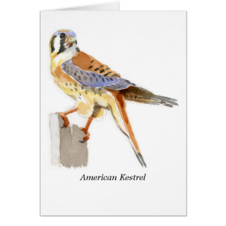 American Kestrel Note Card