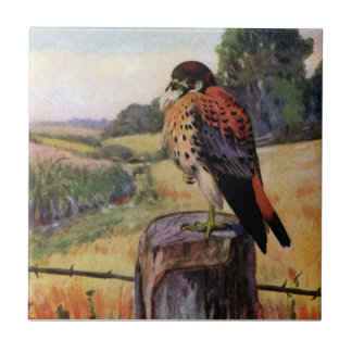 American Kestrel on a Barbed Wire Fence Ceramic Tile