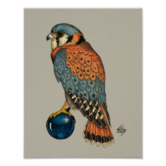 American Kestrel on a blue glass ball Poster