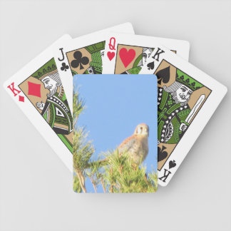 American Kestrel Card Deck