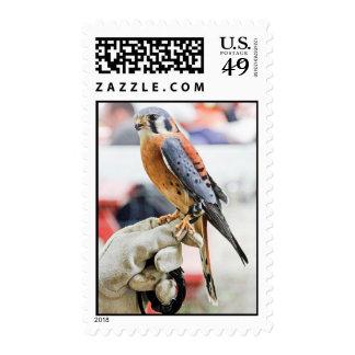 American Kestrel Postage Stamp