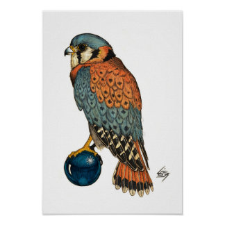 American Kestrel Print