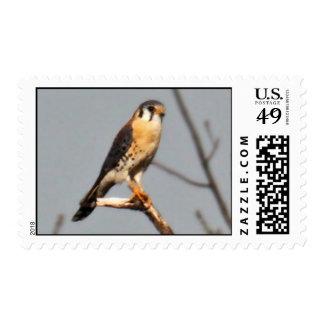 American Kestrel Stamp