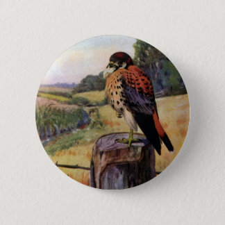 American Kestrels on a Barbed Wire Fence Button