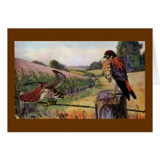 American Kestrels on a Barbed Wire Fence Cards