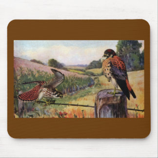 American Kestrels on a Barbed Wire Fence Mouse Pad