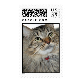 American Longhair Gray/Grey Tabby Cat PostageStamp Postage Stamp