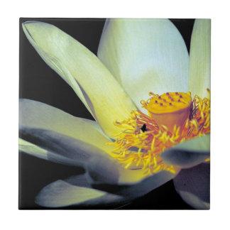 American Lotus Tile