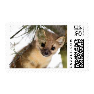American Marten Or Pine Marten Postage