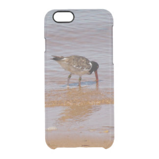 American Oyster Catcher Chappy Island Phone Case