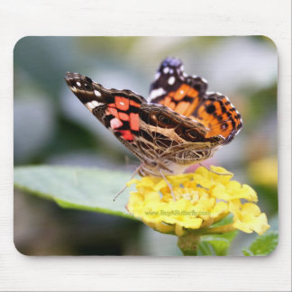 American Painted Lady Mouse Pad