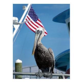 American Pelican Postcard