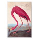 American Pink Flamingo Audubon Vintage Bookplate Photo Print