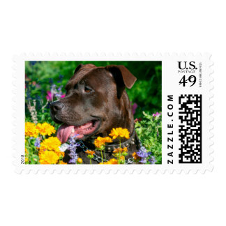 American Pit Bull in field of flowers Postage